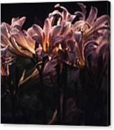 Last Light Lillies Canvas Print
