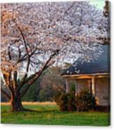 Last Light Of Day In Early Spring Canvas Print