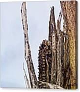 Last Of The Corn Canvas Print