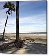 Last Pine Standing Canvas Print