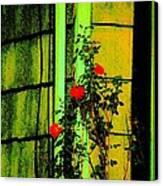 Last Roses Of The Season Canvas Print