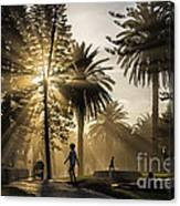 Late Afternoon Sunbeams Canvas Print