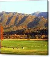 Late Autumn Afternoon In Cades Cove Canvas Print
