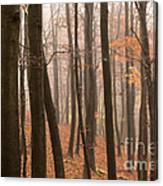 Late Autumn Beech Canvas Print