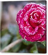 Late Blossom Canvas Print