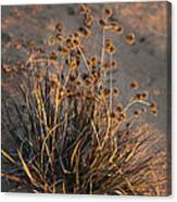Late Day Color Canvas Print