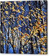 Late Fall Canvas Print