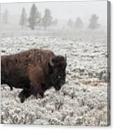 Late Fall Yellowstone Canvas Print
