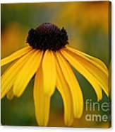 Late Summer Blooms Canvas Print