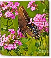 Late Summer Color Canvas Print