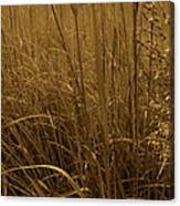 Late Summer Day In The Prairie Canvas Print