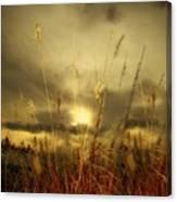 Late Summer Sun Through The High Grass Canvas Print
