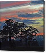 Late Sunset Trees In The Mist Canvas Print