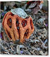 Latticed Stinkhorn Canvas Print