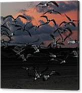 Laughing Gull Twilight Canvas Print