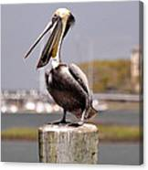Laughing Pelican Canvas Print