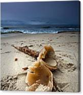 Laughing With A Mouth Full Of Sand Canvas Print