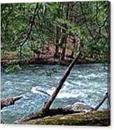 Laurel Hill Creek Hemlock Overlook Canvas Print