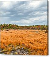 Laurel Summit State Park Bog Canvas Print