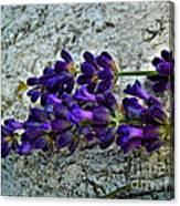 Lavender On White Stone Canvas Print
