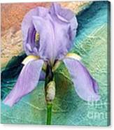 Lavendar Iris Canvas Print