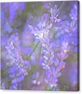 Lavender 5 Canvas Print