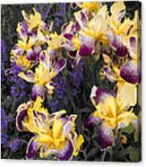 Lavender And Irises Canvas Print