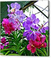 Lavender And Red Orchids At Maerim Orchid Farm In Chiang Mai-tha Canvas Print