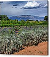 Lavender And Sunflowers Canvas Print