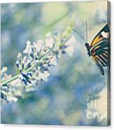 Lavender And The Butterfly Canvas Print