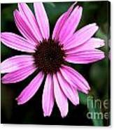 Lavender Daisy Canvas Print