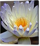 Lavender Edged Lotus Canvas Print
