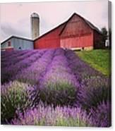 Lavender Farm Landscape Canvas Print
