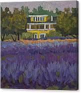 Lavender Farm On Vashon Island Canvas Print