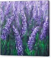 Lavender Garden II Canvas Print