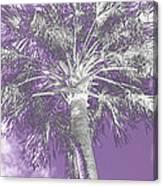 Lavender Glow Palm Tree Myakka River State Park Usa Canvas Print