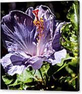 Lavender Hibiscus Canvas Print