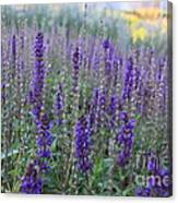 Lavender In The City Park Canvas Print