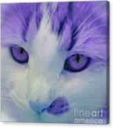 Lavender Kitten Canvas Print