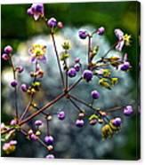Lavender Mist Explosion Canvas Print