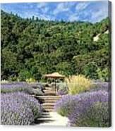 Lavender Path Canvas Print