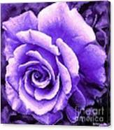 Lavender Rose With Brushstrokes Canvas Print