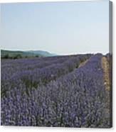 Lavender Sky Canvas Print
