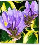 Lavender Spring Flowers Canvas Print