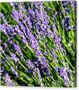 Lavender Square Canvas Print