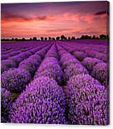 Lavender Sunset Canvas Print