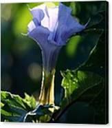Lavender Trumpet Flower Canvas Print