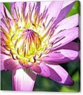 Lavillita Flower 10117 Canvas Print