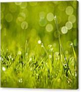 Lawn Twinklers Canvas Print