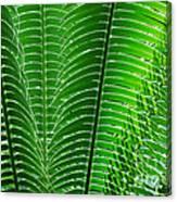 Layered Ferns I Canvas Print
